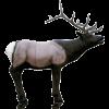 Delta McKenzie Targets - Elk