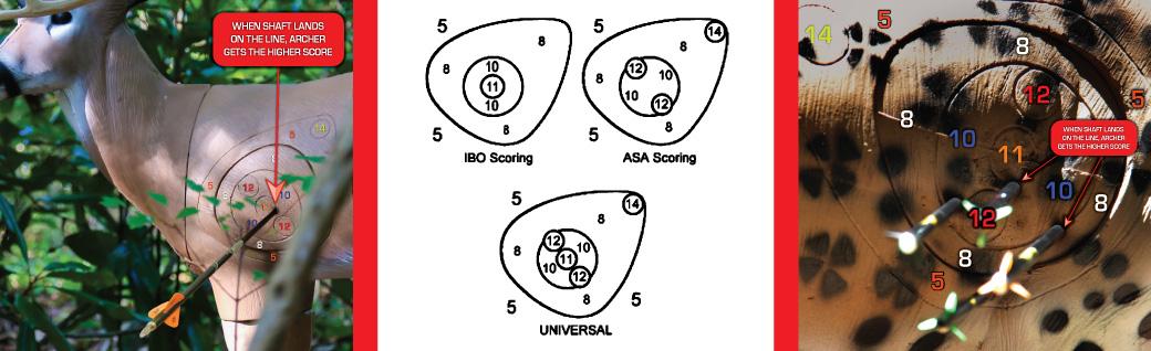 Asa Scoring Ring Size