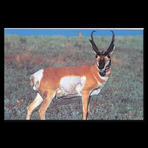 Delta McKenzie Targets - Paper Antelope