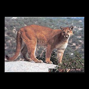 Delta McKenzie Targets - Paper Cougar