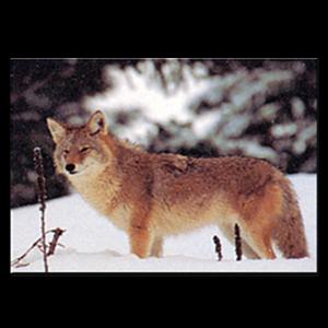 Delta McKenzie Targets - Paper Coyote