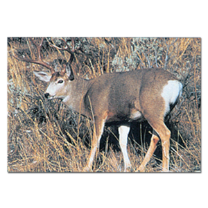 Delta McKenzie Targets - Paper Mule Deer