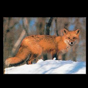Delta McKenzie Targets - Paper Red Fox
