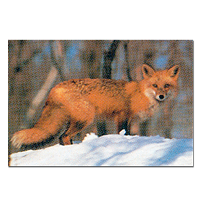 Delta_Paper_Red_Fox_15 copy