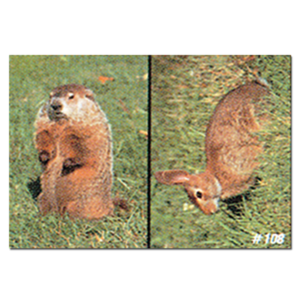 Delta McKenzie Targets - Woodchuck and Rabbit