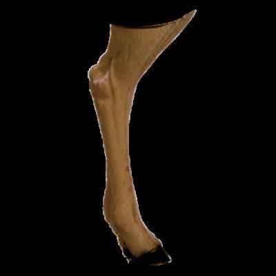 Antelope Backyard 3D Archery Target Replacement Back Legs