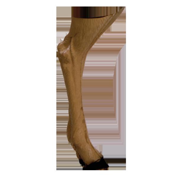 Delta McKenzie - Antelope 3D Archery Target Replacement Back Legs