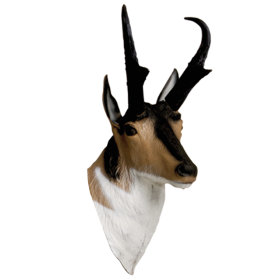 Antelope 3D Archery Target Replacement Head