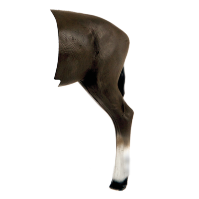 African Blesbok Rear