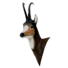 Delta McKenzie - African Blesbok Archery Target Replacement Head