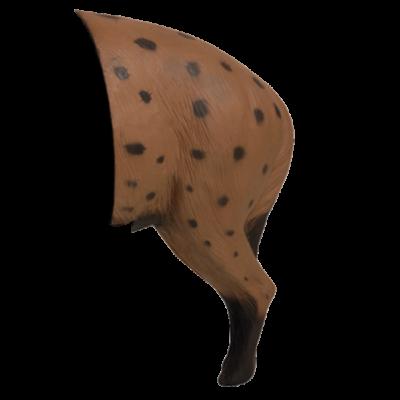 African Hyena Rear