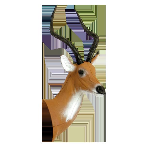 African Impala Head