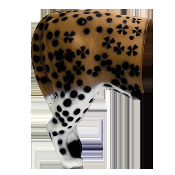 African Leopard Rear