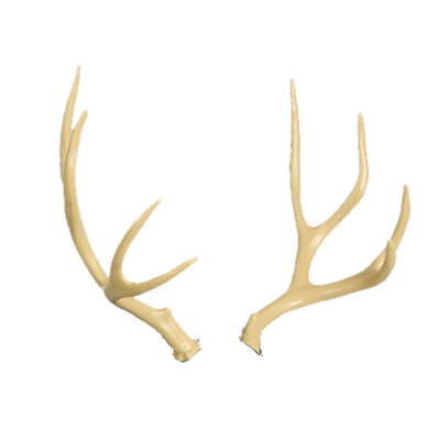 Mule Deer Antler Replacement