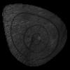 Delta McKenzie - Wild Boar 3D Archery Target Replacement Core
