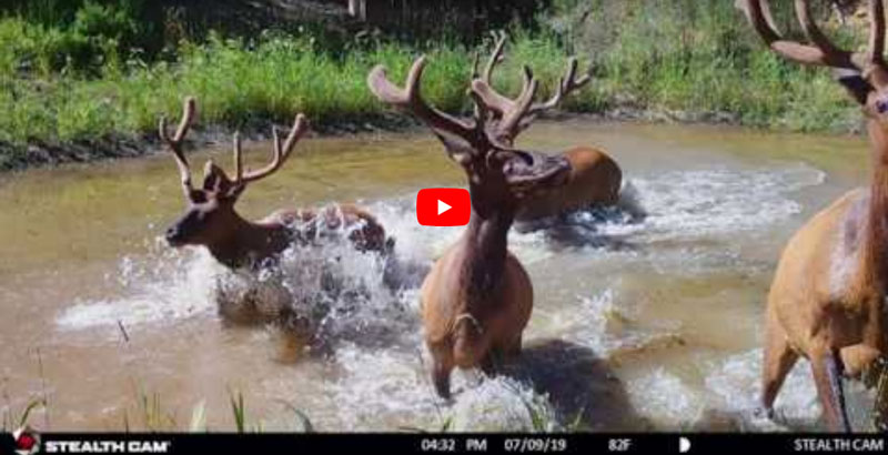 Fred Eichler - Trail Cams - Bowhunter Basecamp